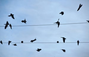 Birds take off from electric wires in Los Angeles, California where seasonal winds have fuelled recent wildfires and smoke across parts of the region