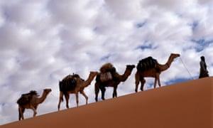 A camel caravan walking up a steady slope in a Libyan desert.