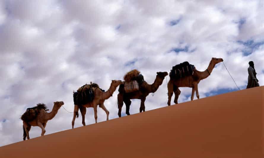 Camels cross the desert.