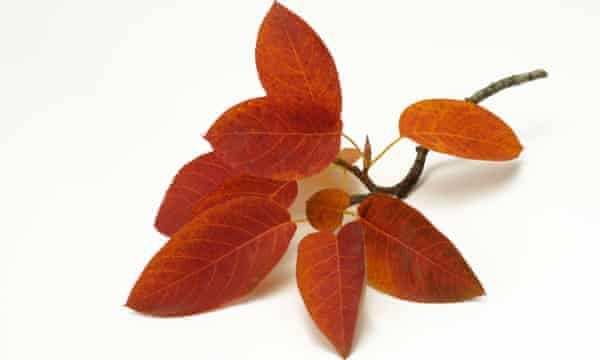 Take a leaf from James's book: a pretty amelanchier will help absorb carbon.