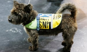 A canine attendee at the SNP conference in Glasgow.