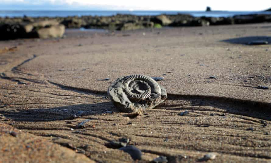 An ammonite on the beach at Saltwick Bay, England.