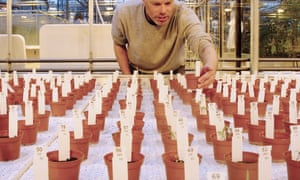 Dutch researcher Wieger Wamelink inspects food crops grown on simulated Mars soil.