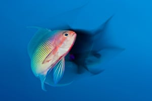 Highly commended, underwater world: Courtship dance