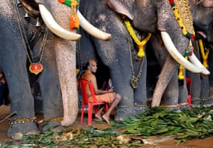 Kochi, IndiaA mahout sits with elephants taking part in Onam, an annual harvest festival, at a temple on the outskirts of Kochi