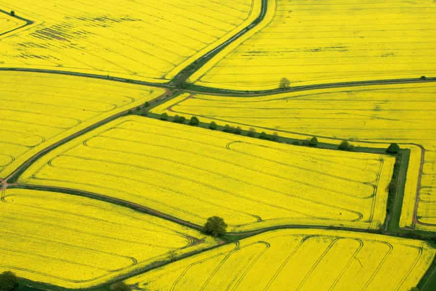 Oilseed rape fields. Agricultural change is by far the most significant driver of decline, the report says