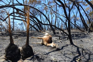 A deer lays dead after a bushfire near One Tree Hill in the Adelaide Hills on 5 January in the worst bushfire conditions in South Australia for three decades.