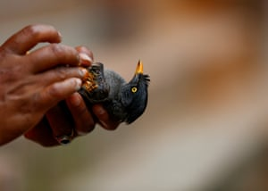 A Nepalese woman applies a homemade remedy to an injured jungle myna bird rescued near her house in Bhaktapur