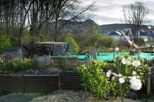 Craigentinny Telferton allotments were founded in 1923 by a local man on unused council land in Edinburgh