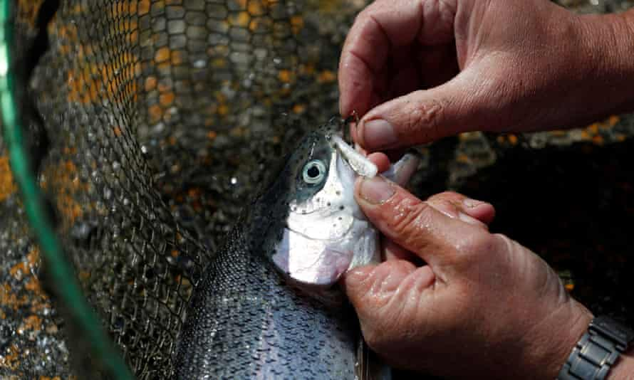 An angler removes a hook from the mouth of a fish