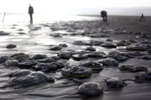 People walk among dead jellyfish on Cucaco Beach on Chiloé Island in southern Chile