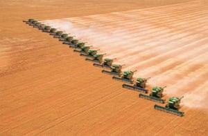 John Nicoletti's headers in full swing during the harvest in Merridan, Western Australia.