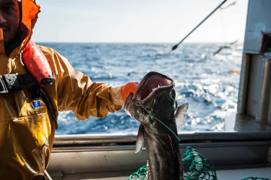 Longline fishing for toothfish