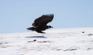 A Monk Vulture swoops along in new series China: Between Clouds And Dreams.