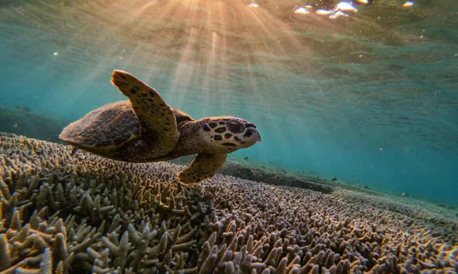 Unesco's Fanny Douvere says the suggestion Australia was reassured about the Great Barrier Reef's status was not true.