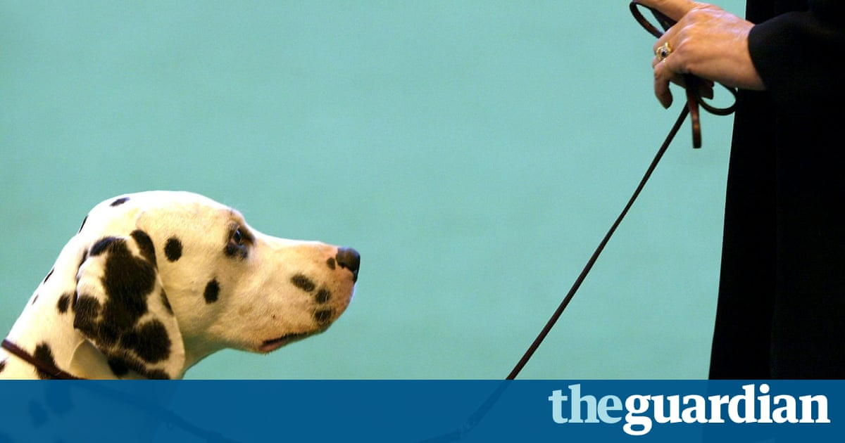 Dogs Have Episodic Memories Just Like Humans Suggests Study - 15 dogs werent expecting come back home early