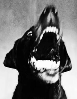 A dog barking