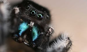 The finding is exciting because it overturns the idea that the world of arachnids is dominated by sight and touch.