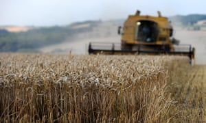 A combine harvester making it's way along a field of wheat in East Norton in Leicestershire.