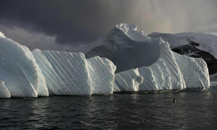 An iceberg in the western Antarctic peninsula where krill populations are declining, threatening a vital food source for seals, whales and penguins