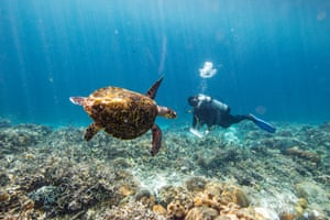 Ahmadia sees a hawksbill turtle. WWF has been working with a seaweed farming community to promoet alternative livelihoods to protect endangered turtles.