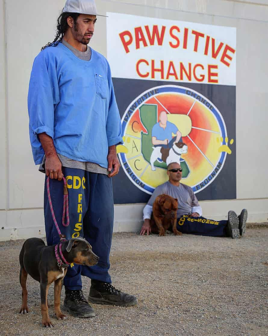 Accent the pawsitive: prisoners and dogs helping each other on the programme.