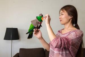 Ms Yang, 27, places a hat on her pet eclectus parrot