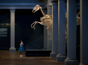A child beneath a horse skeleton