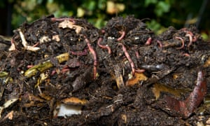 A lively compost that could enhance a grower's soil.