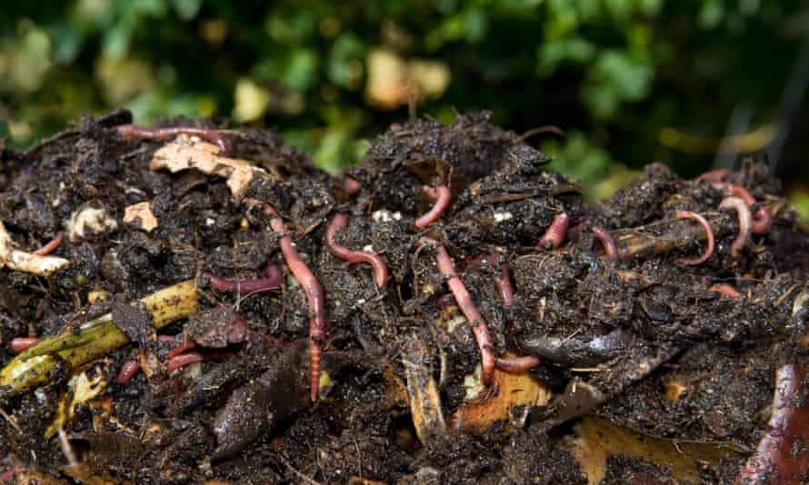 Worms and compost