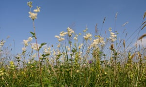 Prescribe yourself meadowsweet, a horticultural miracle cure