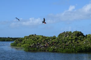 Critics say it will encroach on a national park, damaging one of the world's largest nesting sites for the magnificent frigate bird.