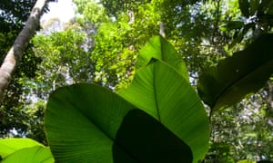 The view from your toilet in the jungle