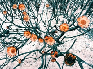Amy Paterson of Cape Town, South Africa, won first place in flowers with this picture taken at the Silvermine Nature Reserve after fires ravaged her home town in March.