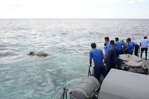 The Sri Lankan navy mounted a 12-hour rescue after spotting an elephant struggling to stay afloat in the sea, 8km off the island's northeast coast