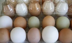 United Egg Producers FOIA