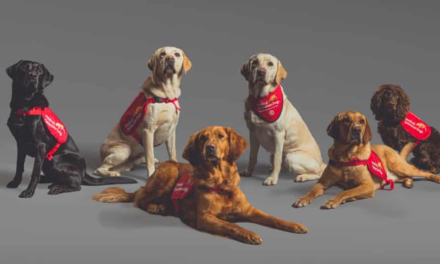 Six lovely dogs wearing medical detection dog tabards