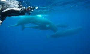 d8036c6cc38 A moment that changed me – looking a sperm whale in the eye | Philip ...