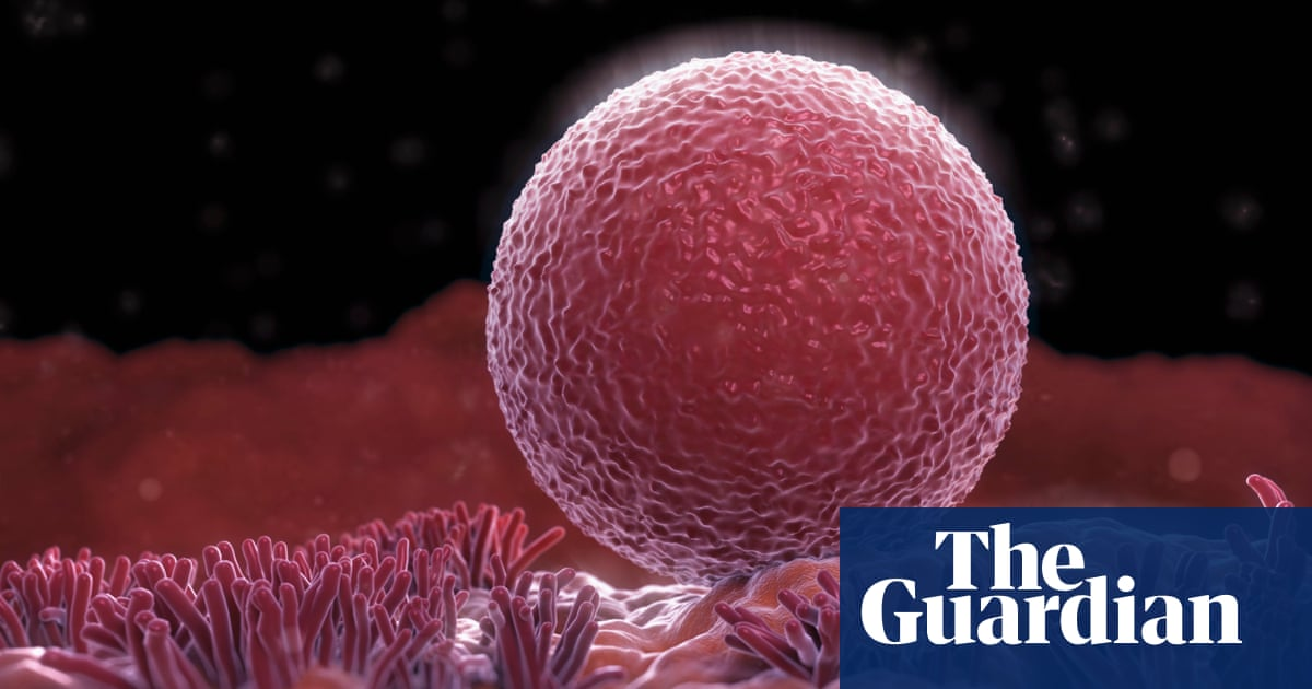Evidence Suggests Womens Ovaries Can Grow New Eggs Science The
