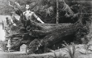 Trees of Mystery Park, Redwood Highway, ca. 1950