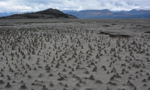 "Sections of the newly exposed bed of Kluane Lake contain small pinnacles. Wind has eroded sediments with a harder layer on top that forms a protective cap as the wind erodes softer and sandier sediment below. These pinnacles, just a few centimeters high, are small-scale versions of what are sometimes termed ""hoodoos."""