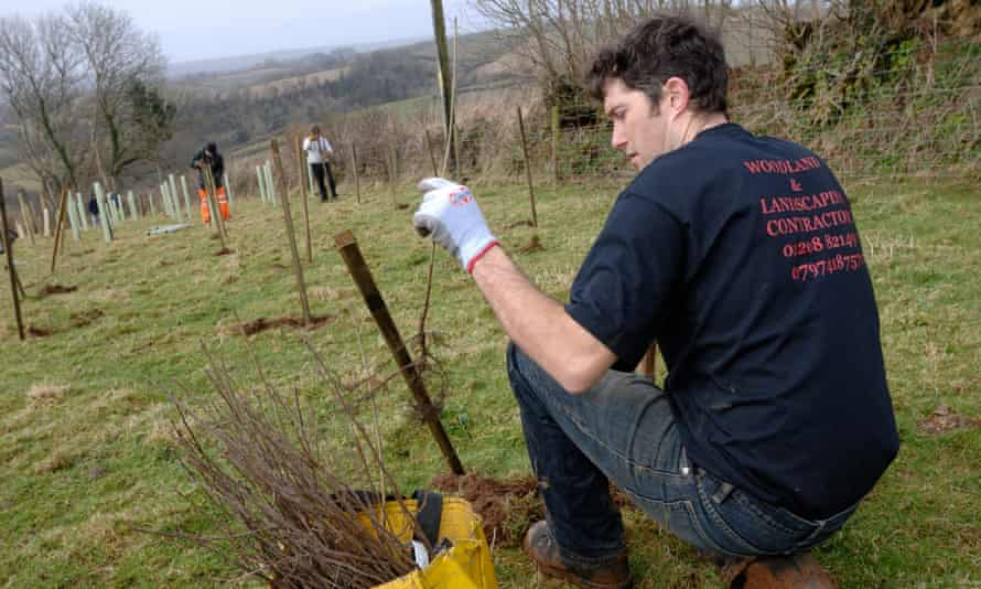 Woodland Trust is encouraging tree planting through its MOREwoods scheme.