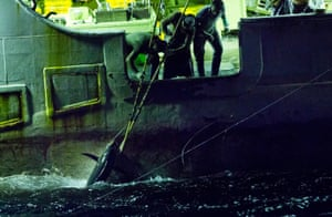 Tuna is hauled on to a Korean longline fishing boat in the central Pacific Ocean. The process of setting lines and hauling them back in again on these boats is a never ending cycle, and crew often only get a few hours rest a day.