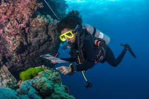 Yashika Nand of WCS Fiji inspects corals during a dive in Vatu-i-Ra