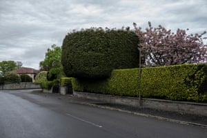 A large hedge overhangs the pavement in Cramond.