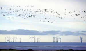 Barnacle geese on the Solway Firth, against a backdrop of the Robin Rigg offshore windfarm