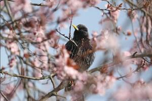 Starling sightings have fallen by 80% since the Big Garden Birdwatch began in 1979.
