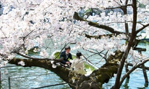 Transient beauty in Tokyo.