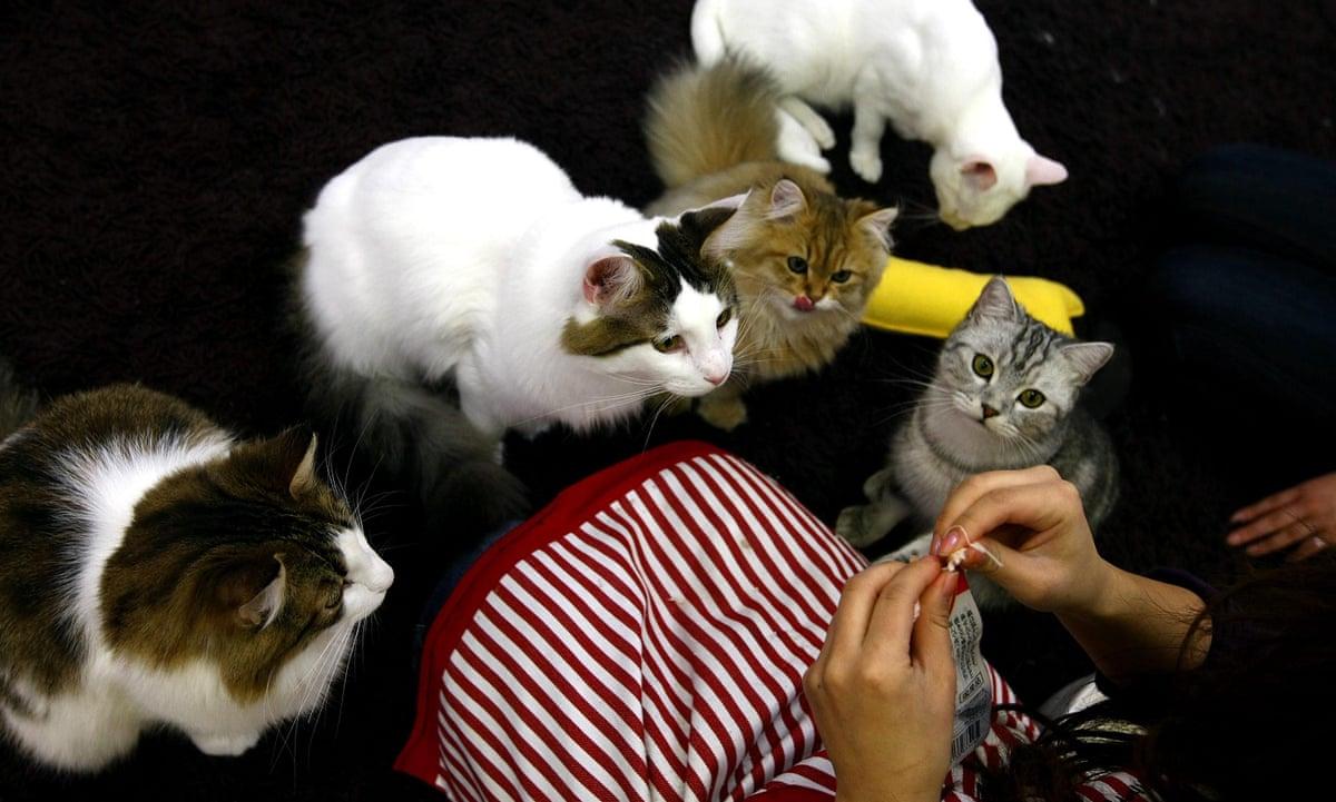 Tokyo Cat Cafe Guardian