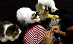 Cat cafes, where people can spend time with their favorite cat for about 10 US dollars an hour, are now getting more popular with people living in urban areas.